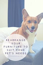 Furniture To Love by Rearrange Your Furniture To Suit Your Pet U0027s Needs My Kid Has Paws