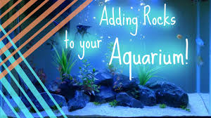 cheap fish tank decorations youtube