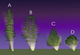 Outdoor Up Lighting For Trees Help Page 12 Low Voltage Uplighting Of Trees