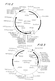 patent us6919075 bacteriophage displaying aβ epitopes and method
