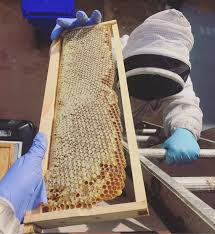 beekeeping like a the pros and cons of rooftop hives