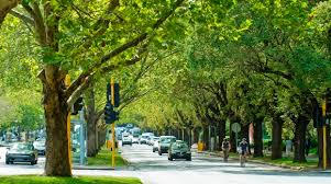 tree planting and selection city of port phillip website