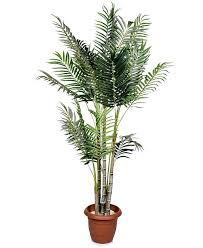 indoor plants safe for cats u2013 ozonesauna club