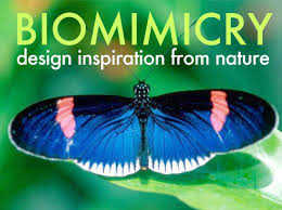 design inspiration nature finding inspiration in nature biomimicry for a better planet