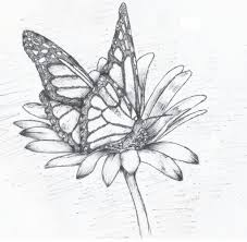 drawing flower and butterfly how to draw a butterfly
