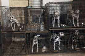 Which State Has The Most Dog Owners Per Capita According To 2016 Stats Humane Society U0027horrible 100 U0027 List 2017 Of Worst Puppy Mill