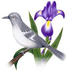 state bird of south dakota state birds and flowers south dakota thru wyoming