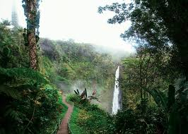 Hawaii vegetaion images Hawaii has 10 of the world 39 s 14 climate zones an explorer 39 s guide jpg
