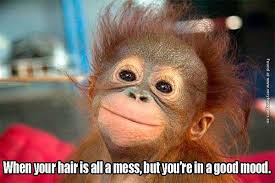 Funny Monkey Meme - funny pictures messy hair but good mood story of my life