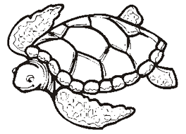 realistic animal coloring pages realistic sea turtle coloring page animal coloring pages of