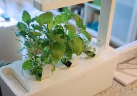 click and grow smart herb garden apartment therapy