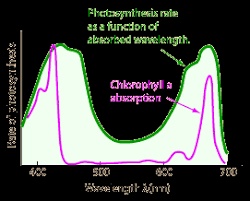 the absorption of light by photosynthetic pigments worksheet answers light absorption for photosynthesis