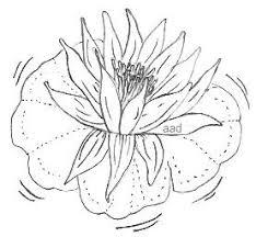 Simple Lotus Flower Drawing - lotus flower easy image to trace or draw drawings u0026 sketches