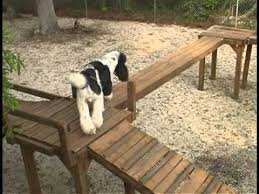 Dog Backyard Playground by Dog Obstacle Confidence Course Would Love To Build Such A Fun