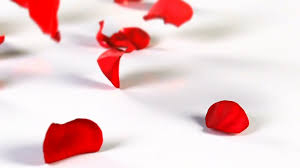 Rose Petals Red Rose Petals Falling Stock Video Footage Videoblocks