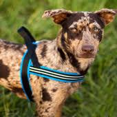 Comfort Flex Dog Harness Walkydog Plus Dog Bike Leash Official Site Bike With Your Dog