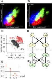 An Information Maximization Approach To Blind Separation And Blind Deconvolution Cultured Cortical Neurons Can Perform Blind Source Separation