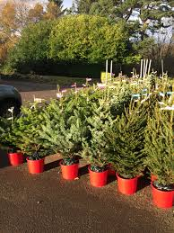 ben reid garden centre aberdeen keep it real christmas trees