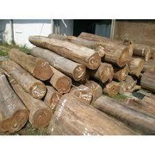 wood log in indore madhya pradesh wooden log suppliers dealers