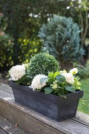 winter evergreen window box the balcony gardener