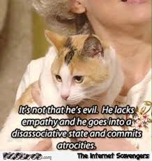 Evil Cat Meme - it s not that he s evil funny cat meme pmslweb