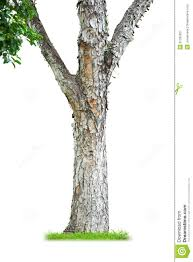 tree trunk royalty free stock photography image 31395827