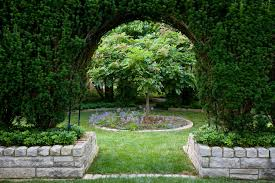 japanese yews and english yew bushes