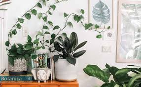 biggest house plants what houseplants grow well in the kitchen better homes and gardens