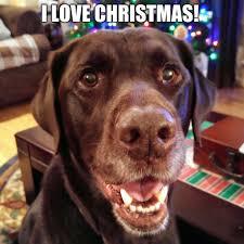Christmas Dog Meme - i love christmas imgflip