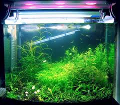 400 Watt Hps Grow Light 400 Watt Hps Grow Light On Winlights Com Deluxe Interior