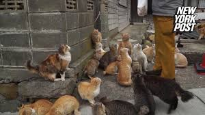 cat island cat island a real place where kitties reign youtube