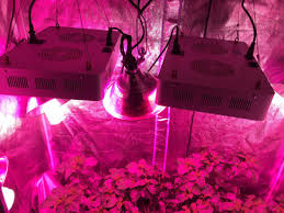 led lights too bright is this possible growing peppers