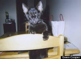 Blind Cat Sanctuary Homer Heroic Blind U0027wonder Cat U0027 Who Inspired Millions Dies In