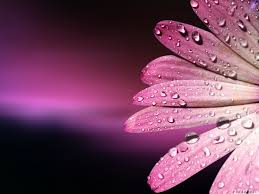 pink color images pink hd wallpaper and background photos 10579442 pink color wallpaper free download sf wallpaper