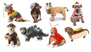 lobster halloween costumes top 20 best cute dog costumes for halloween