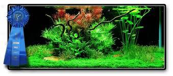 Aquascape Freshwater Aquarium Easy Life Aquascaping Aga Easy Life