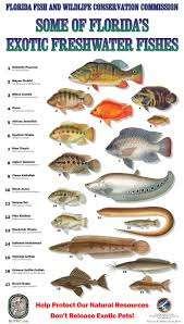 fish id fishing is fun pinterest exotic fish fish and exotic