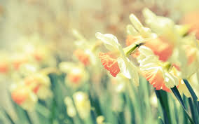 i love the flowers the bird sings