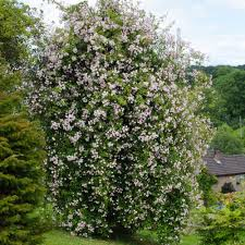 paul u0027s himalayan musk highly recommended popular searches