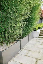 best 25 bamboo planter ideas on pinterest bamboo screening