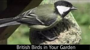 Birds In Your Backyard British Birds In Your Garden Youtube