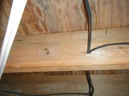 mold on floor joists in basement basements ideas