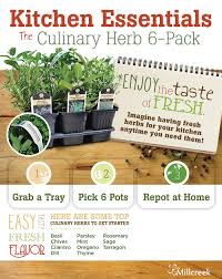 Kitchen Herb Pots Kitchen Essentials Culinary Herb 6 Pack Program Millcreek Gardens