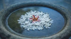 Hotel Flower Garden Unawatuna by Sisikirana Villa Unawatuna Sri Lanka Youtube