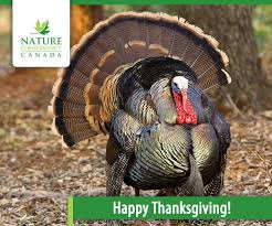 thanksgiving turkey e card nature conservancy of canada