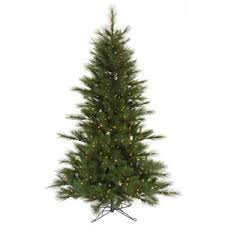 pine trees characteristics of a live pine