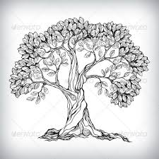 12 best olive tree images on pinterest olive tree trees and drawing