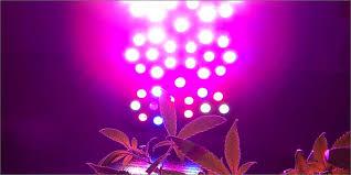 Led Grow Lights Cannabis Grow Better Cannabis With Led Lights