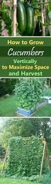 Pinterest Small Garden Ideas by 74 Best Images About Garden On Pinterest Gardens Raised Beds