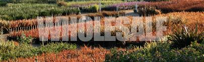 native plant nursery brisbane pacific nurseries serving landscape professionals since 1869
